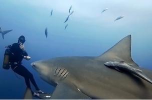 Акула убила австрийского мастера-дайвера