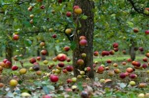 Садоводы Польши требуют отобрать зарплаты у политиков