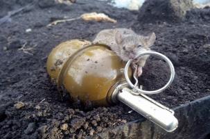 Украинского солдата может подорвать и мышь