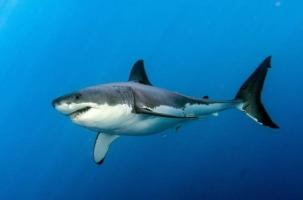 Акула похитила ребенка на глазах у отца