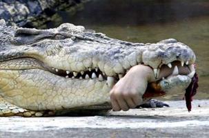 Филиппинский крокодил вместо польской свиньи