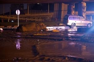 Хищники во время потопа сбежали из зоопарка Тбилиси